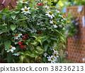 flower, gardening, flower arrangement 38236213