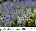flower, gardening, flower arrangement 38236215