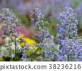 flower, gardening, flower arrangement 38236216