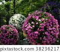 flower, gardening, flower arrangement 38236217