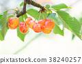 櫻桃 水果 果實 38240257