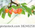 櫻桃 水果 果實 38240258