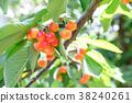 櫻桃 水果 果實 38240261