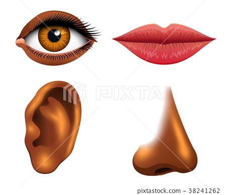 Human biology, sensory organs, anatomy 38241262