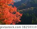 枫树 枫叶 红枫 38250310