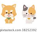 寵物狗和貓坐 38252392