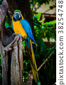 Parrot, lovely bird, animal and pet in the garden 38254748