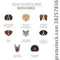 dog, Dutch, breed 38257836