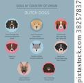 dog, Holland, Netherlands 38257837