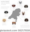 dog, Holland, Netherlands 38257838