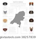 dog, Holland, Netherlands 38257839