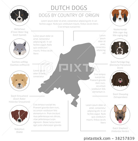 Dogs by country of origin. Dutch dog breeds 38257839