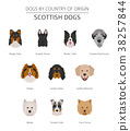 Dogs by country of origin. Scottish dog breeds 38257844