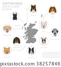 Dogs by country of origin. Scottish dog breeds 38257846