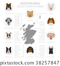 Dogs by country of origin. Scottish dog breeds 38257847