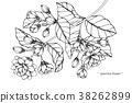 พื้นหลัง,ดอกไม้,การวาดภาพ 38262899
