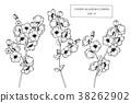 Cherry blossom flower drawing illustration.  38262902