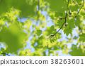 녹색 신록 이미지 38263601