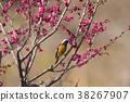 小鸟 红尾鸲 花朵 38267907