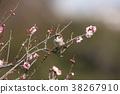 小鸟 花朵 花卉 38267910
