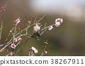 小鸟 花朵 花卉 38267911