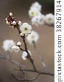 植物 植物学 植物的 38267914