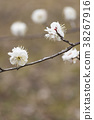 植物 植物学 植物的 38267916