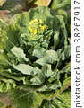 花朵 花卉 花 38267917