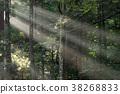 빛줄기, 광망, 이세신궁 38268833