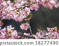 벚꽃, 동박새, 꽃 38277490