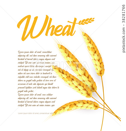 Grain wheat, barley, oat, rice, cob bright 38281766