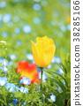 봄빛 [튤립] 38285166