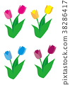 tulipa, bloom, blossom 38286417