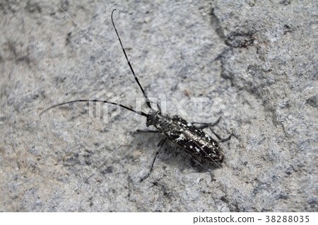 昆虫 虫子 漏洞 38288035