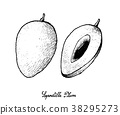 Hand Drawn of Sapodilla Plum on White Background 38295273