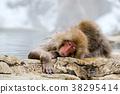 长野地狱谷温泉雪猴 38295414
