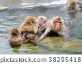 长野地狱谷温泉雪猴 38295418
