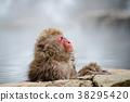長野地獄谷溫泉雪猴 38295420