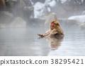 长野地狱谷温泉雪猴 38295421
