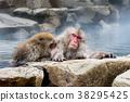 长野地狱谷温泉雪猴 38295425