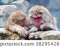 长野地狱谷温泉雪猴 38295426