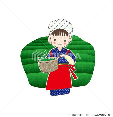 Tea picking eighty eight night daughter 38296516