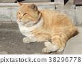 도둑 고양이, 육지의, 노라 38296778