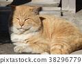 도둑 고양이, 육지의, 노라 38296779
