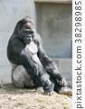 大猩猩 38298985