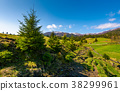 slope, spruce, tree 38299961
