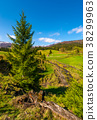 slope, spruce, tree 38299963