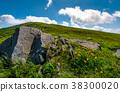 dandelion, rock, hillside 38300020