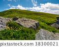 dandelion, rock, hillside 38300021