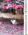 묘, 토끼, 오쿠노 섬 38300032